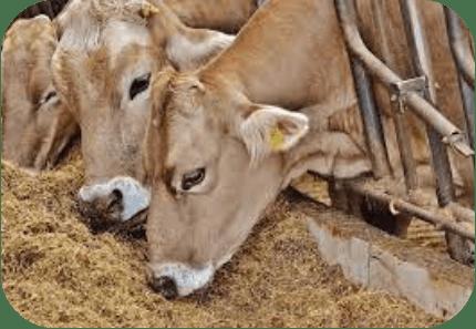 sodium in animal feed