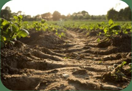 soil and crop analysis